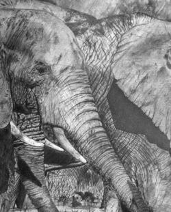 Elefanten Bleistiftzeichnung, 30x40cm