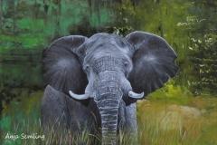 Elefant, 60x80cm, Acryl auf Keilrahmen
