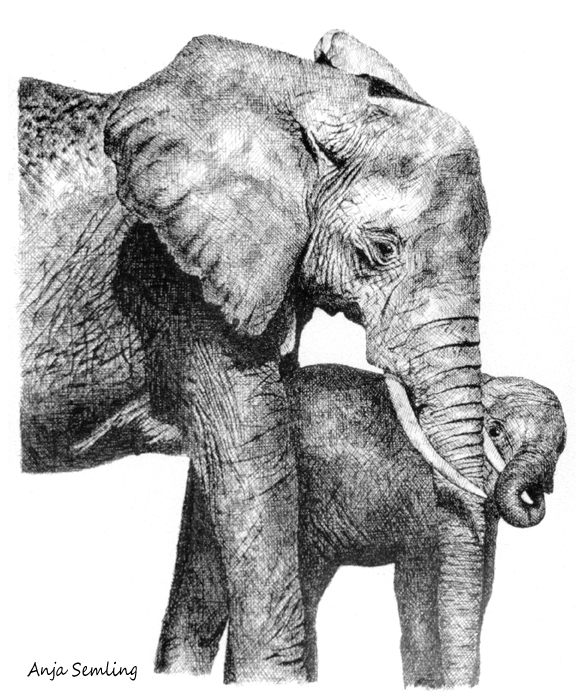 Federschraffur Elefanten